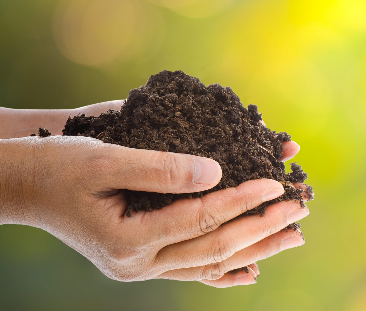 Which soil or compost should i use in my garden for Simply garden maintenance