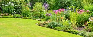 soft landscaping, planting, plants, trees, shrubs, bulbs, Chelsea flowers show, catherine Smith, garden designer, Stockton, Teesside, Middlesbrough, darlington, Cleveland, Teesvalley, Wynyard, Yarm,