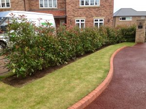 Soft landscaping, Photinia, Red Robin, Garden hedging, Garden design, landscaping, landscapers, Green Onion Landscaping, turfing, cobbles, driveway, Yarm,