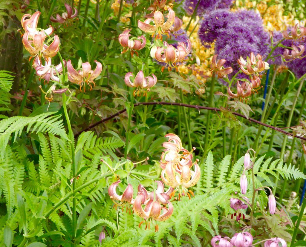 Interior designs medium size vertically growing onions growing onions - Soft Landscaping Garden Design Plants Flowers Alliums Chelsea Flower Show