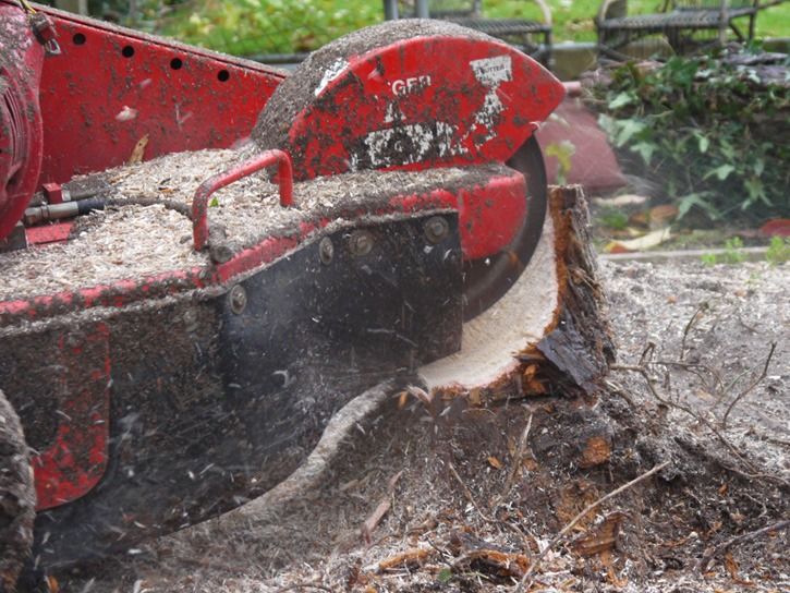 Stump grinding, stump munching, tree stump removal, tree removal, tree felling, Stockton, Darlington, Middlesbrough, Teesside, County Durham, North Yorkshire, Landscapers, landscaping, design, Green Onion Landscaping