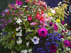 hanging baskets, mixed flowers, soft landscaping, Green Onion Landscaping, Stockton, darlington, Middlesbrough,landscapers