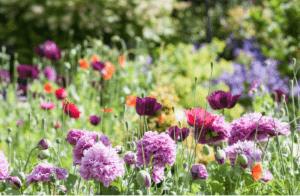 wildflowers-creating-wildlower-garden-uk-stockton-Green-onion-landscaping