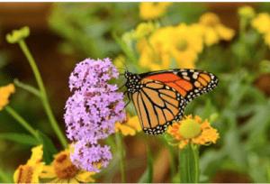 wildflower, garden, wildflowers, landscaping, meadow, wildflower turf, Stockton, middlesbrough, darlington, Green Onion Landscaping,