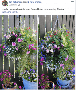 large-multi floral-hanging baskets-Green-Onion-Landscaping-Stockton-Teesside- Huge-colourful-Premium-Darlington